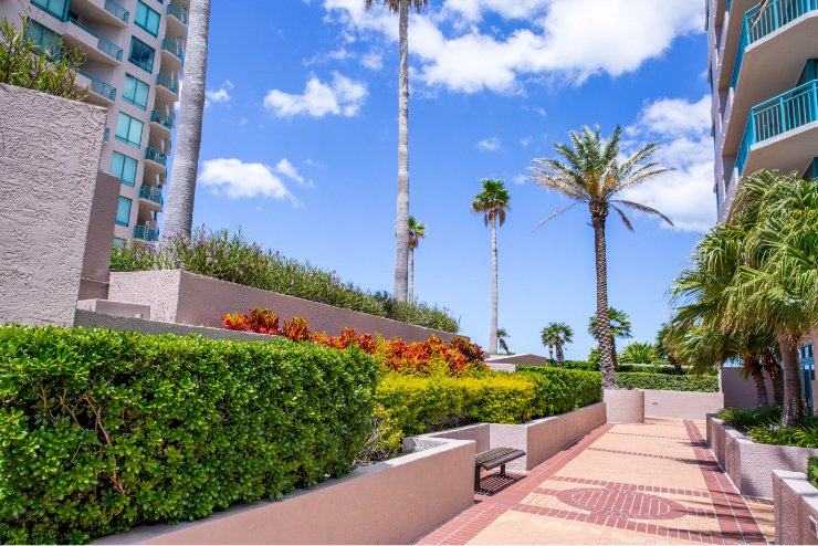High Rise Apartments in Clearwater Florida Landscaping Ornamentals and Palms