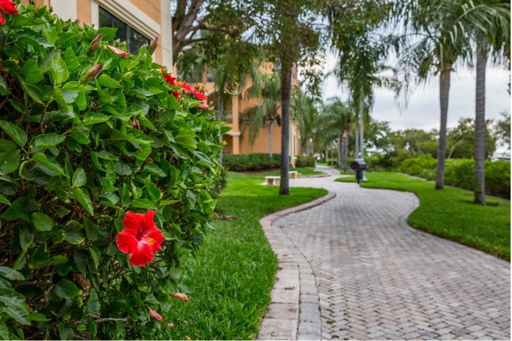 Commercial Landscaping condominiums in Palm Harbor Florida